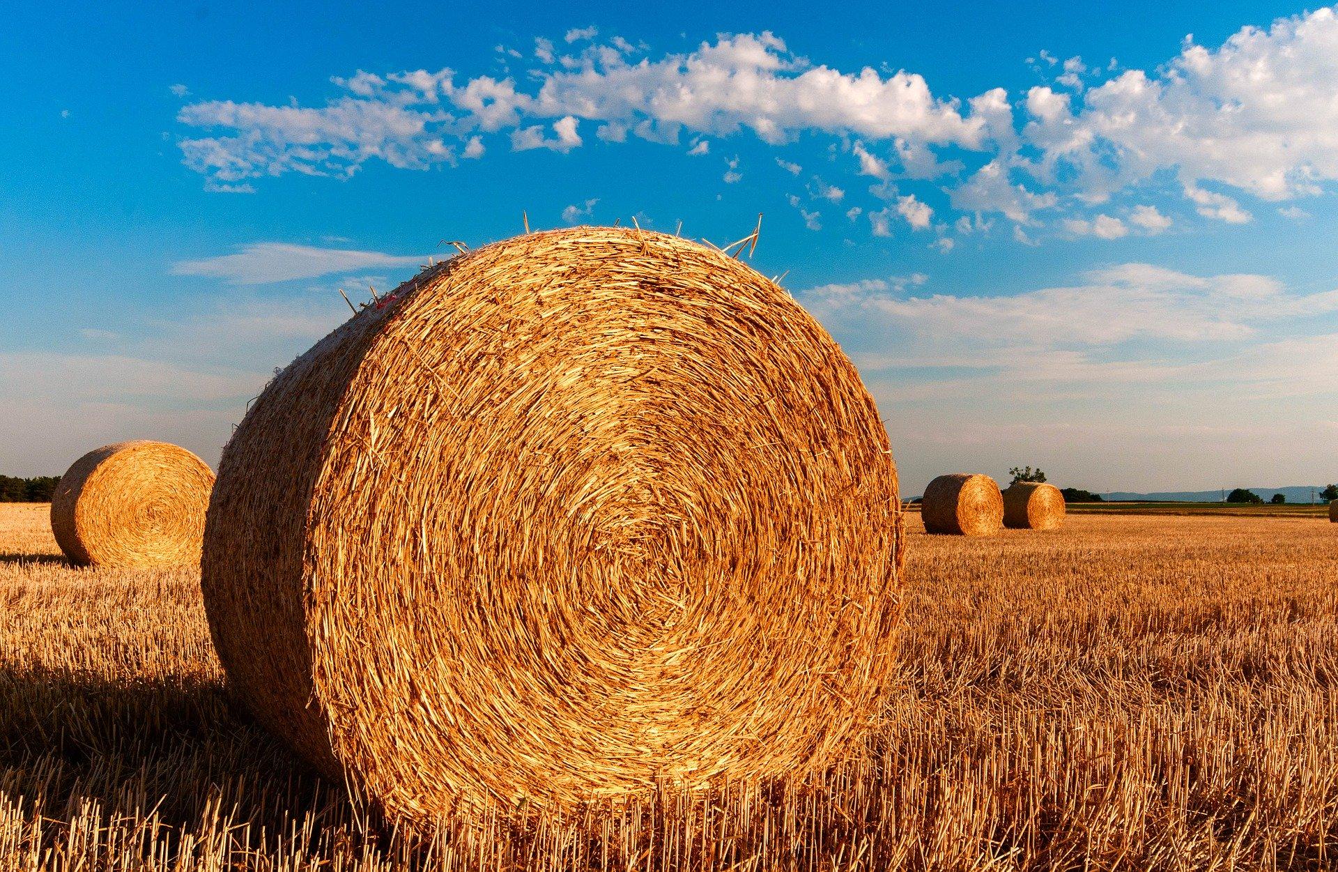 Strohballen Auf Feld Branchenspezifisch Germania Inkasso Agrar